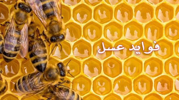 فواید عسل چیست؟ | فواید عسل برای پوست | فواید عسل و دارچین
