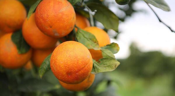 خواص پرتقال | خواص پرتقال برای پوست | خواص آب پرتقال