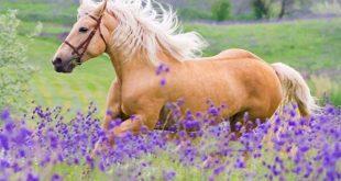 تعبیر خواب اسب سرخ ، قهوه ای ، زرد ، دیدن اسب سفید در خواب