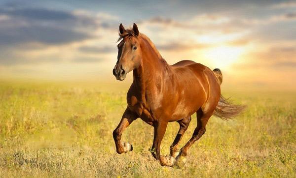 دیدن اسب در خواب