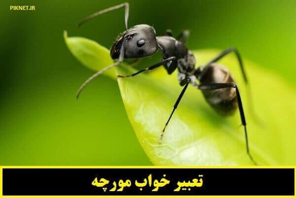 تعبیر خواب مورچه روی بدن و مورچه زیاد در خانه نشانه چیست؟