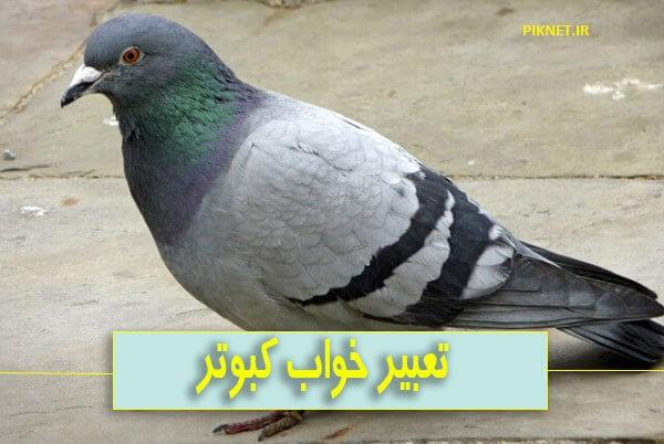 تعبیر خواب کبوتر سبز، خاکستری، سفید، قرمز و سیاه