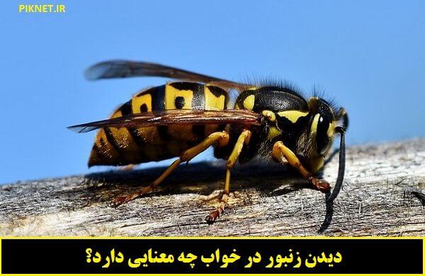 دیدن زنبور در خواب چه تعبیری دارد؟ | تعبیر خواب زنبور