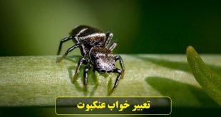 تعبیر خواب عنکبوت قرمز، سفید، سبز، زرد، قهوه ای و سیاه بزرگ