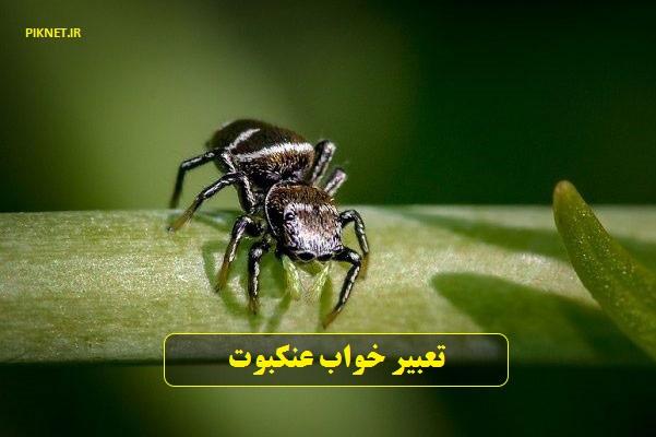 تعبیر خواب عنکبوت قرمز، سفید، سبز، زرد، قهوه ای، سیاه بزرگ و دیدن خواب تار عنکبوت