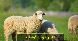 تعبیر خواب گوسفند سفید و گوسفندان زیاد| دیدن گوسفند چه تعبیری دارد؟