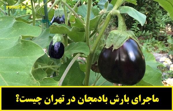 ماجرای بارش بادمجان در تهران چیست؟